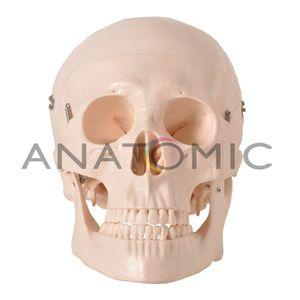 Cranio-em-5-Partes-Ref-TGD-0102-Anatomic