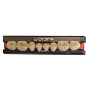 Dente-Biotone-Posterior-Inferior-Dentsply
